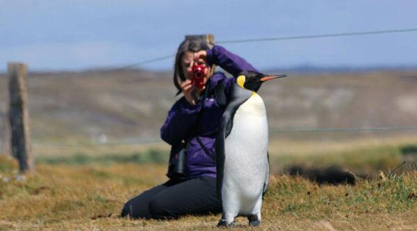 Mujer fotografiando a un Pingüino Rey el Tierra del Fuego
