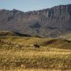 Jinete por colinas de Sierra Baguales