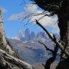 Vista de las Torres del Paine entre árboles