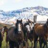 Tropilla de caballos en Sierra Baguales