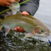 Pesca de trucha en la Patagonia