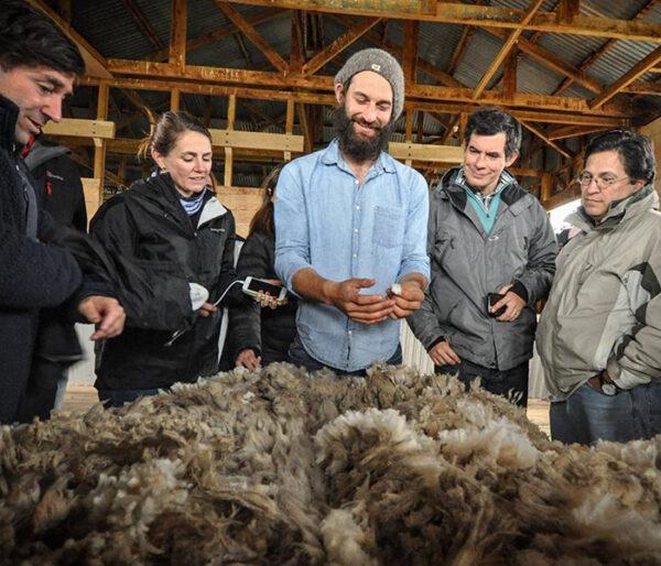 Demostración esquila de una oveja en una Estancia